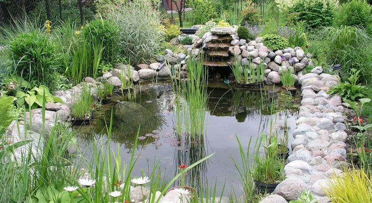 Company That S Water Garden Plants